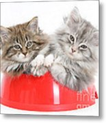 Kittens In A Food Bowl Metal Print
