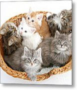 Kittens In Basket Metal Print