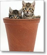 Kittens In Flowerpot Metal Print