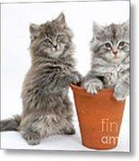 Kittens In Pot Metal Print