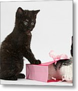 Kittens Playing With Birthday Gift Bag Metal Print