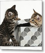Kittens Playing With Box Metal Print