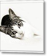 Kitty Cat Greeting Card Get Well Soon Metal Print