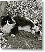 Kitty In A Vineyard Metal Print
