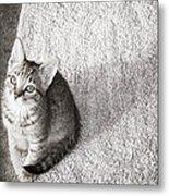 Kitty's Shadow Metal Print