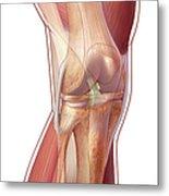 Knee Anatomy Metal Print