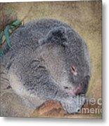 Koala Sleeping Metal Print by Betty LaRue