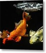 Koi By The Lillies Metal Print by Don Mann