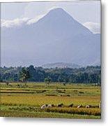 Laborers In A Rice Field Work Metal Print