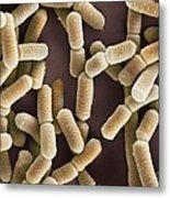 Lactobacillus Bacteria, Sem Metal Print by Dr Kari Lounatmaa