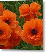 Lacy Poppies Metal Print