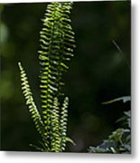 Lacy Wild Alabama Fern Metal Print