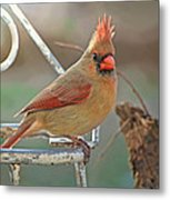 Lady Cardinal With Her Crown On Metal Print