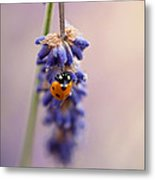 Ladybird And Lavender Metal Print