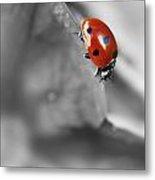 Ladybird On Leaf 1.0 Metal Print