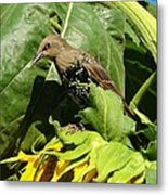 Ladybird Starling On A Sunflower Metal Print