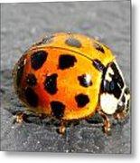 Ladybug In The Sun Metal Print