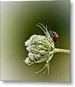 Ladybug Ladybug Fly Away Home Metal Print