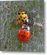 Ladybug Love Metal Print