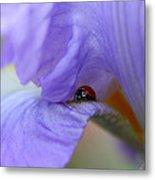 Ladybug On Iris Metal Print