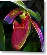 Lady's Slipper Metal Print by Judi Bagwell