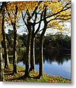 Lake And Trees, Mount Stewart, Co Down Metal Print