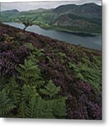 Lake District View From A Hillside Metal Print