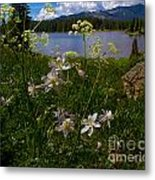 Lake Irwin Wildflowers Metal Print