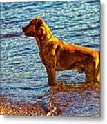 Lake Superior Puppy Metal Print