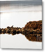 Lake Visitors Metal Print