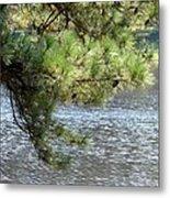 Lakeside Pines Metal Print