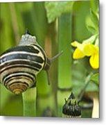 Land Snail 5698 Metal Print