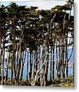 Lands End Trees Metal Print
