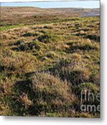 Landscape With Cow Grazing In The Field . 7d9942 Metal Print