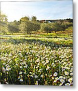Landscape With Daisies Metal Print