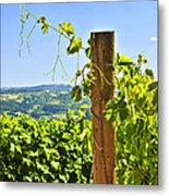 Landscape With Vineyard Metal Print