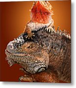 Lap Lizard Metal Print by Jim Carrell