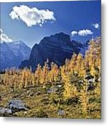 Larch Trees From The Saddleback Trail Metal Print