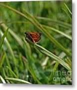 Large Skipper Butterfly Metal Print