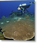 Large Staghorn Coral And Scuba Diver Metal Print