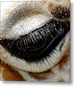 Lashes On The Eye Metal Print