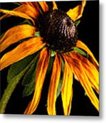 Last Day Of A Black-eyed Susan Metal Print