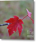 Last Leaves Metal Print