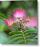 Late May Color Metal Print