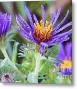 late Summer Fleabane Metal Print