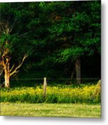 Late Summer's Eve Metal Print