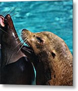 Laughing Seals Metal Print