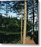 Lauragh, Co Kerry, Ireland Trees In A Metal Print