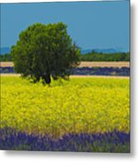 Lavender And Colza In Summer, Provence, France Metal Print