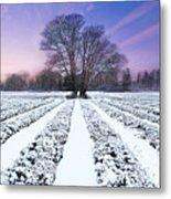 Lavender In Winter Metal Print
